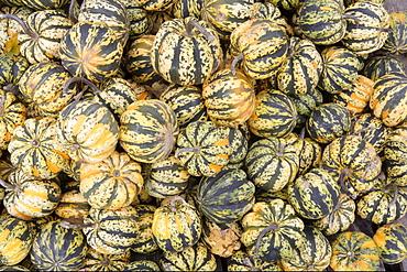 Pumpkins, USA