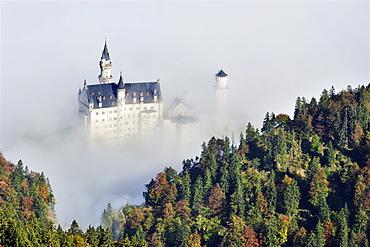 Neuschwanstein Castle above fog, Oberallgaeu, Bavaria, Germany