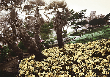 Palm trees at the garden of a manor house, Torquay, Devon, Southern England, Great Britain, Europe