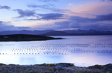 View at the nets of a fish farm in front of the Beara peninsula, County Kerry, Ireland, Europe
