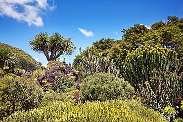 Jardin Canario, Tafira, Gran Canaria, Canary Islands, Spain