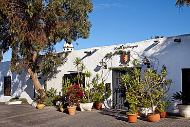 Plants in front of a house, Teguise, Lanzarote, Canary Islands, Spain, Europe
