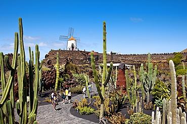 Windmill and cacti, botanical garden, Jardin de Cactus, architect Cesar Manrique, Guatiza, Lanzarote, Canary Islands, Spain, Europe