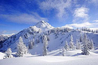 Winter forest at Schildenstein, Schildenstein, Tegernseer range, Bavarian Prealps, Upper Bavaria, Bavaria, Germany