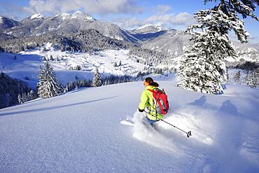 Woman descending from Schildenstein on backcountry skis, Schildenstein, Tegernseer range, Bavarian Prealps, Upper Bavaria, Bavaria, Germany