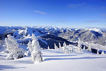Winter forest with Setzberg in the background, Wallberg, Tegernseer range, Bavarian Prealps, Upper Bavaria, Bavaria, Germany