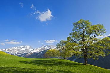 Spring at the Klausen pass, Unterschachen, Canton Uri, Switzerland