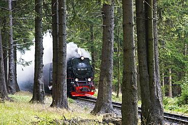 Forest, steam railway, Brockenbahn, stream train, HSB Harz narrow-gauge railways, Schierke, Harz, Saxony-Anhalt, Germany