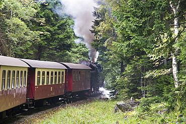 Forest, steam railway, Narrow Gauge Railways, Brockenbahn, Schierke, Harz, Saxony-Anhalt, Germany