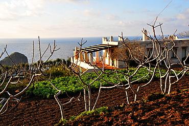 Capers farming, Farm in Pollara on the Island of Salina, Aeolian Islands, Sicily, Italy