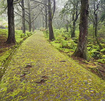 Mossy way in the forest, Caldeirao Verde, Queimadas Forest Park, Madeira, Portugal