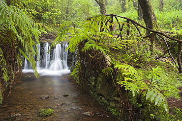 Waterfall with fern in the forest, Caldeirao Verde, Queimadas Forest Park, Madeira, Portugal