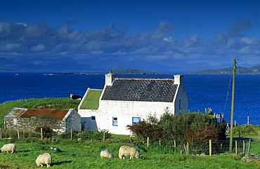 Cottage, farmhouse along the coast, Ring of Beara, County Kerry, Ireland, Europe