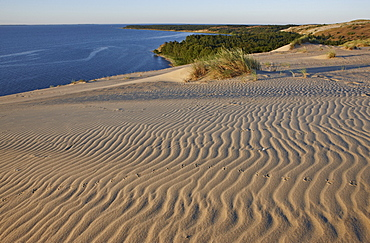 Ripples in the sand on a wandering dune, Curonian Lagoon North of Pervalka, Curonian Spit, Baltic Sea, Lithuania, Europe