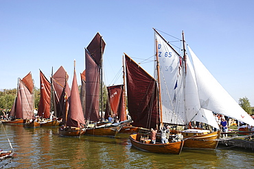 Sailing regatta in Althagen, Saaler Bodden, Fischland-Darss-Zingst Peninsula, Baltic Sea Coast, Mecklenburg Vorpommern, Germany