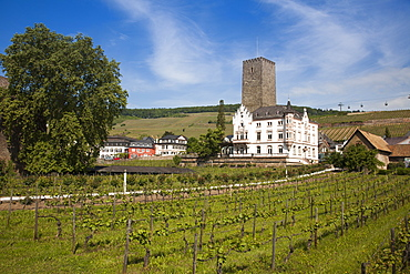 Carl Jung winery and gondola lift above vineyards, Rudesheim am Rhein, Hesse, Germany, Europe