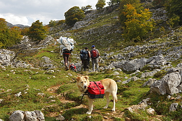 Hikers and dog of Ignacio, keeper of Refugio Vega de Ario, transport of supplies, western Picos de Europa, Parque Nacional de los Picos de Europa, Picos de Europa, Province of Asturias, Principality of Asturias, Northern Spain, Spain, Europe