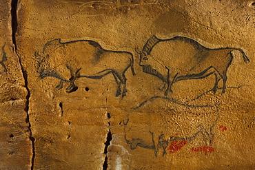 Bisons, prehistoric painting, cave painting, about 15000 BC, Covaciella, Asturias, replica, Parque de la Prehistoria de Teverga, Teverga, Park of Prehistory in Teverga, province of Asturias, Principality of Asturias, Northern Spain, Spain, Europe