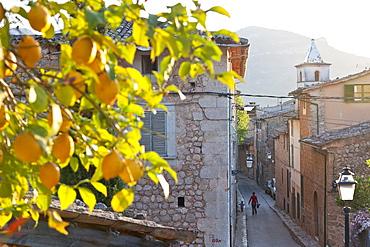 Lemon tree growing over the alley, romantic mountain village Biniaraix, Tramantura, Biniaraix, Mallorca, Spanien