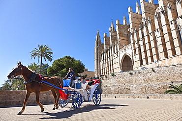 Horse drawn carriage, horse cart, tourists, cathedral Sa Seu, Palma de Mallorca, Mallorca, Spain