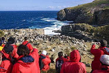 Tourists in rookery of Rockhopper Penguins, Eudyptes chrysocome, New Island, Falkland Islands, Subantarcic