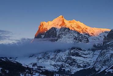 Sunset and last sun on the Wetterhorn, above Grindelwald, Winter Ski Resort in the Jungfrauregion, Bernese Oberland, Canton Bern, Switzerland, Europe
