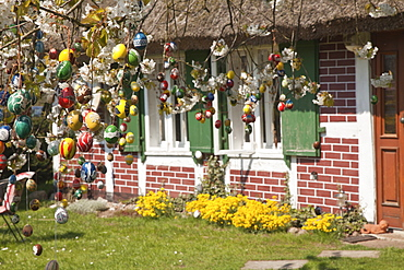 Hand-painted Easter eggs hanging in a tree in Michaelsdorf, Darss, Baltic Sea, Mecklenburg Vorpommern, Northern Germany