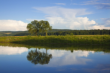 Trees on the banks of the Weser river, Weser Hills, North Lower Saxony, Germany, Europe