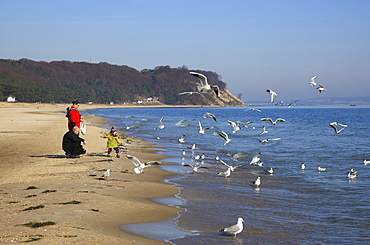 People and seagulls on the beach of Baabe, Island of Ruegen, Mecklenburg Western Pomerania, Germany, Europe