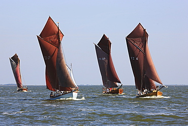 Sailing boats at Saaler Bodden, Fischland Darss Zingst, Mecklenburg Western Pomerania, Germany, Europe