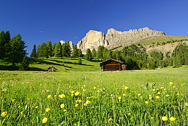 Flowering meadow and hay barns in front of Rotwand, Rosengarten range, Dolomites, UNESCO world heritage site Dolomites, South Tyrol, Italy