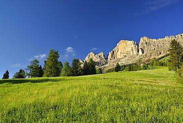 Flowering meadow in front of Rotwand, Rosengarten range, Dolomites, UNESCO world heritage site Dolomites, South Tyrol, Italy