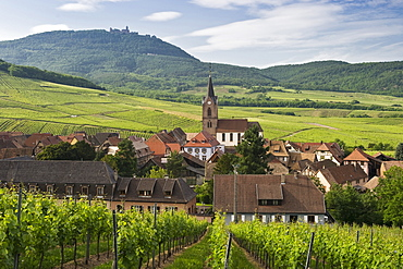 The town of Rodern with vineyards, Chateau du Haut-Koenigsbourg in the background, Alsace, France
