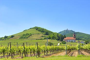 Vineyards at Orschwiller with Koenigsburg, Orschwiller, Alsace, France, Europe