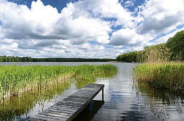Boardwald at lake Wentow in Zabelsdorf, Zehdenick, Land Brandenburg, Germany, Europe