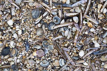Shells on beach, Deauville, Calvados, Basse-Normandy, France
