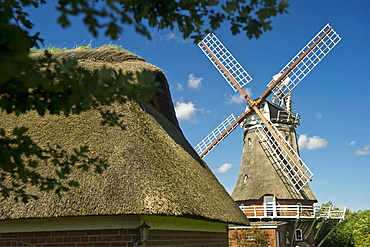 Thatched house and historic windmill, Wrixum, Foehr, North Frisian Islands, Schleswig-Holstein, Germany, Europe