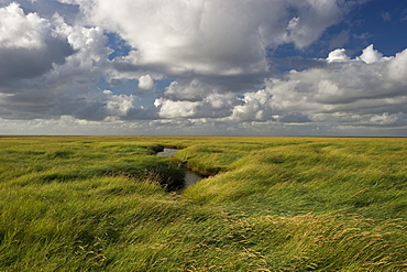 Clouded sky above salt meadows, Westerhever, Wadden Sea National Park, Eiderstedt peninsula, North Frisian Islands, Schleswig-Holstein, Germany, Europe