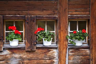Flowers at the windows of Berghaus am Oeschinensee, Bernese Oberland, Canton of Bern, Switzerland