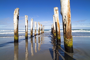 Timber pilings from a former jetty, St Clair Beach, Dunedin, Otago, South Island, New Zealand