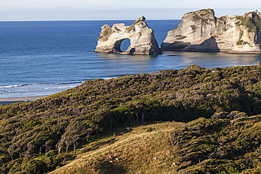 Archway islands along the coast near Wharariki Beach, manuka and kanuka trees, Puponga Farm Track, South Island, New Zealand