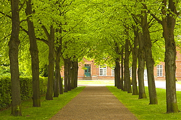 Alley of lime trees, Ploen castle gardens, Holsteinische Schweiz, Schleswig-Holstein, Germany