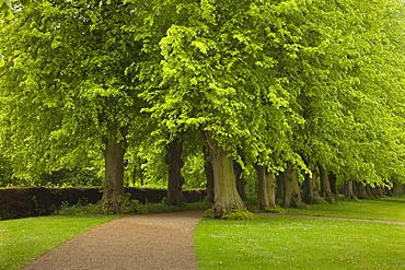 Lime tree alley, Ploen castle gardens, Holsteinische Schweiz, Schleswig-Holstein, Germany