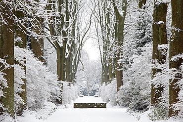 Alley of ash trees, Dortmund, North Rhine-Westphalia, Germany