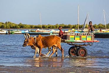 Ox cart on the beach, Tulear, Madagascar, Africa