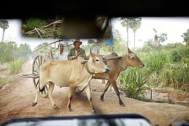 Oxcart, near Roluos, Siem Reap, Cambodia