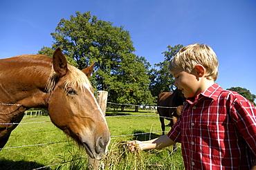 Boy feeding a horse, near Murnau, Upper Bavaria, Bavaria, Germany