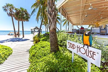 Impression at Gourmet Restaurant The Strip House, Reach Resort, Key West, Florida Keys, USA