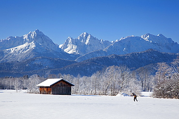 Cross-country skier with alpine backdrop near Schwangau, near Fuessen, Allgaeu, Bavaria, Germany