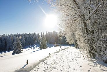 Snow covered trees next to a Winter hiking trail, Schauinsland, near Freiburg im Breisgau, Black Forest, Baden-Wuerttemberg, Germany